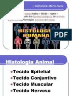histologia matorres