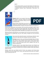 Jenis Ikan Koi Part 1