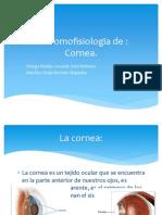 Anatomofisiologia de.pptx
