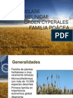 botanica poaceas.pptx