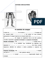 3º ano-sistema_circulatorio