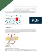 RESPIRASI AEROB.pdf