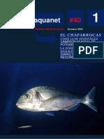 Aquanet 40