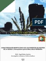 7. Presentación de Ángel Mujica - Perú