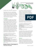 Guía de Horticultura de Iowa State University