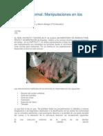 Bienestar animal en lechones .docx
