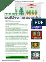 cultivo maconha - plantar maconha_ BÍBLIA DO CULTIVO DE CANNABIS