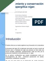 Aislamiento y conservación de Aspergillus níger