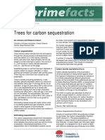 Trees for Carbon Sequestration