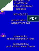 pathology of tubercolosis