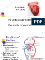 14 Heart Anatomy and Fetal Changes