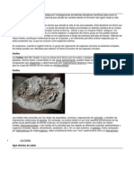 evidencia de la evolución fosil
