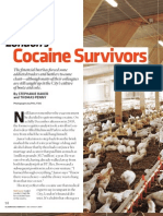 Cocaine Survivors