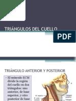 Triangulos Del Cuello y Aponeurosis Cervical