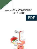 Digestion y Absorcion de Nutrientes