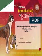 52 Reproduccion Perros