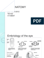 Eye Anatomyanatomi