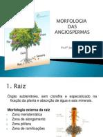 Morfologia Das Angiospermas
