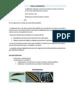 Tema 11 Zoologia