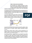 ANATOMÍA Y FISIOLOGÍA DE UNA NEURONA