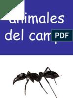 1 Animales Del Campo (1)