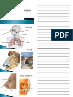 Roteiro Teórico Sistema Respiratório