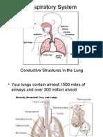 respiratorysystem2