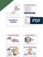 10 - Funciones Con Regulacion Endocrina