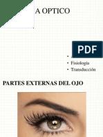 Exposicion Del Ojo (Martes)