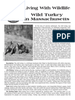 Living With Turkeys