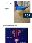 ch 17 the urinary system