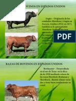 Razas de Bovinos.pdf
