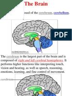 Brain pres