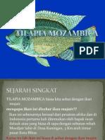 Tilapia Muzambica