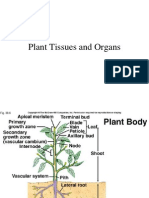 Plant Tissues & Organs