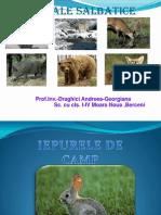 Presentare Animale