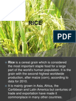 Rice and Wheat-GEO PPT