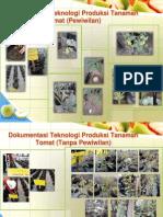 Dokumentasi Teknologi Produksi Tanaman Tomat