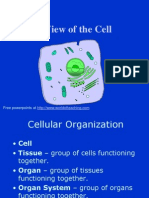 Intro to Cell