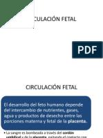 Circulacion Fetal PDF