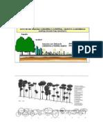 Estructuras de Vegetacion