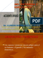 PATOGENIA Y CUADRO CLINICO DEL OFIDISMO FINAL- HUANUCO 2012.ppt