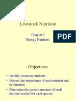 4 animalnutrition energy