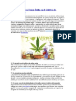 79 Consejos para Tener Éxito en el Cultivo de Marihuana