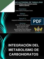 Integración Metabólica de Carbohidratos