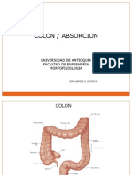 Colon Absorcion[1]