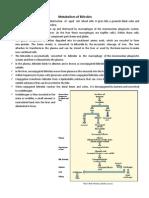 Metabolism of Bilirubin