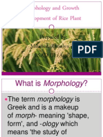 morphology and growth development of rice plant