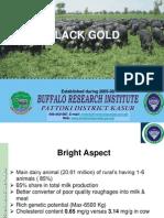 Presentation BRI 21-5-2013