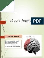 Corteza Frontal
